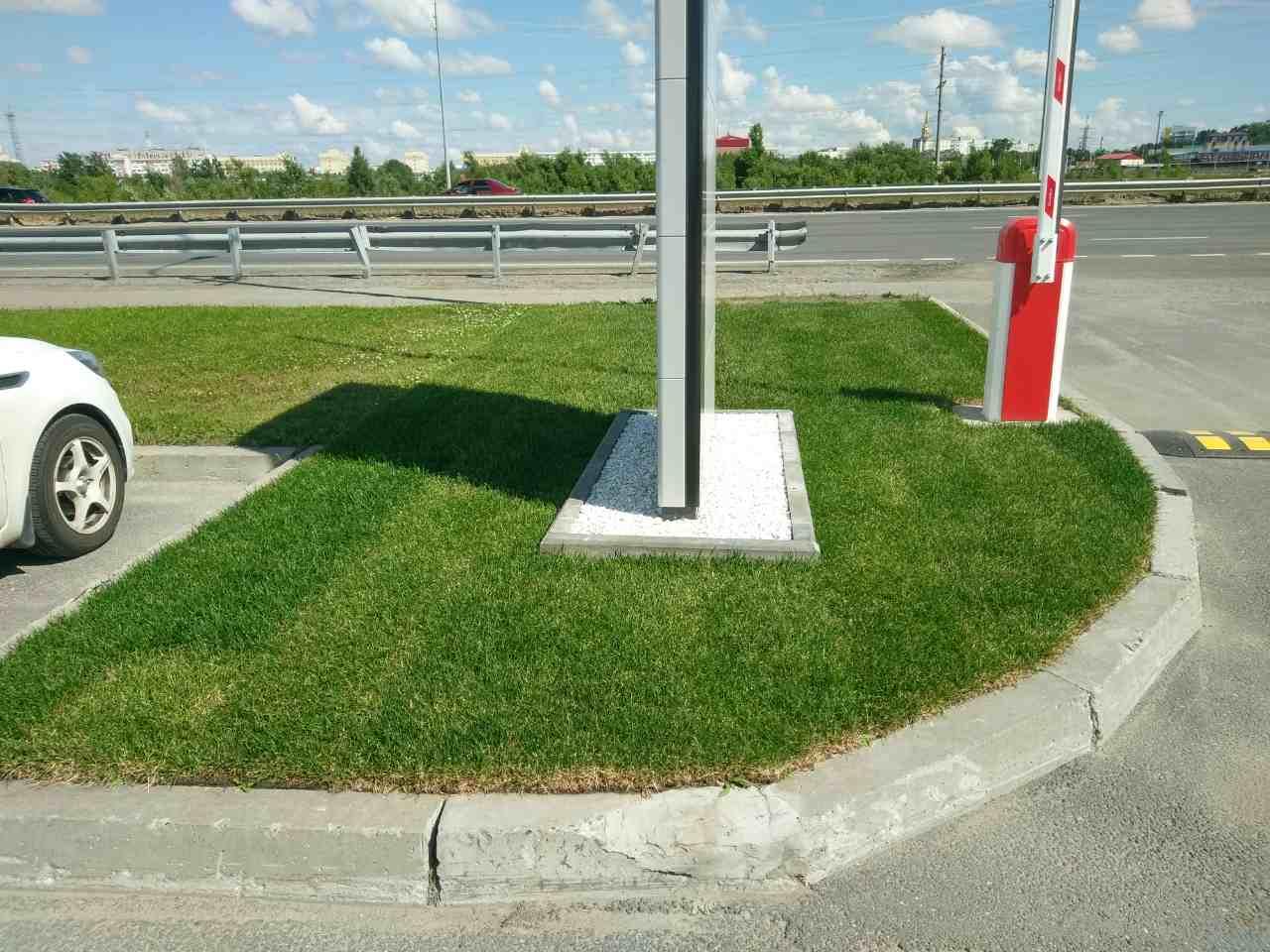 Рулонный газон Стандарт 1