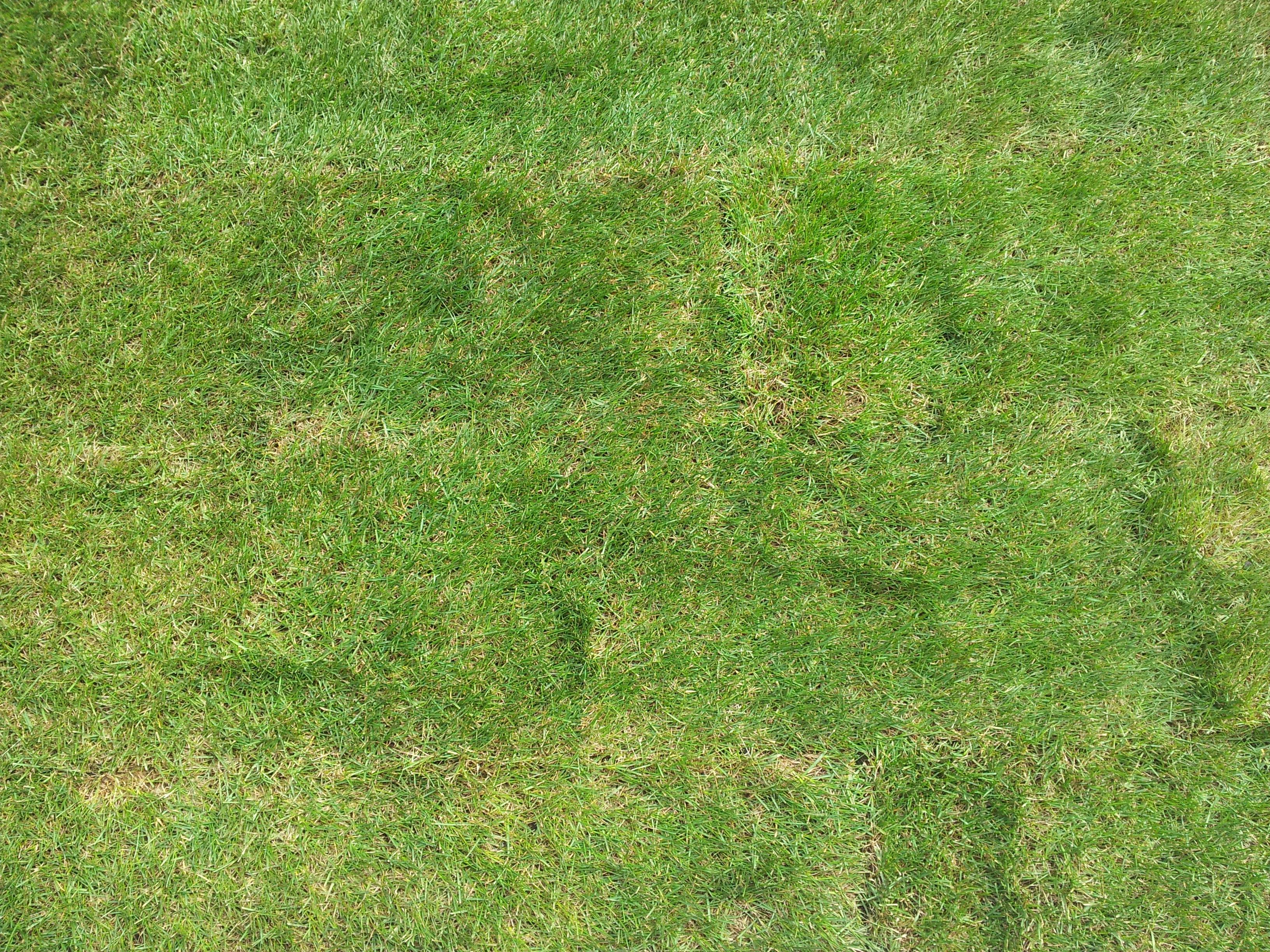 Рулонный газон Стандарт 2